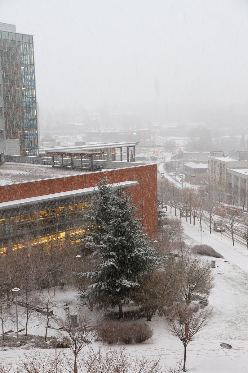 Bellevue snowpocalypse