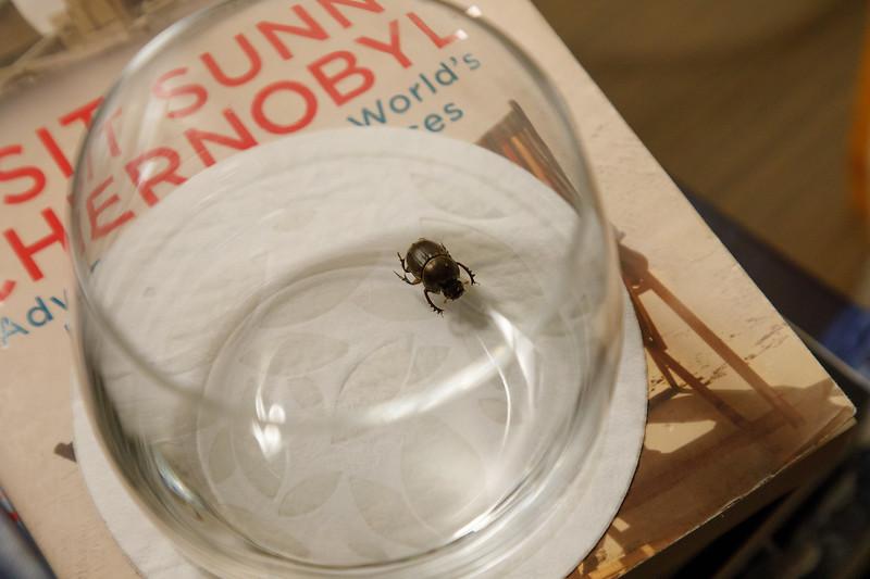 Beetle friend
